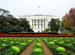 s-watermelon-large